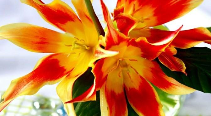 Vente de fleurs – 27 et 28 mai